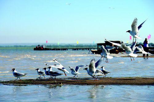 榆林神木红碱淖风景区举行首届观鸟节